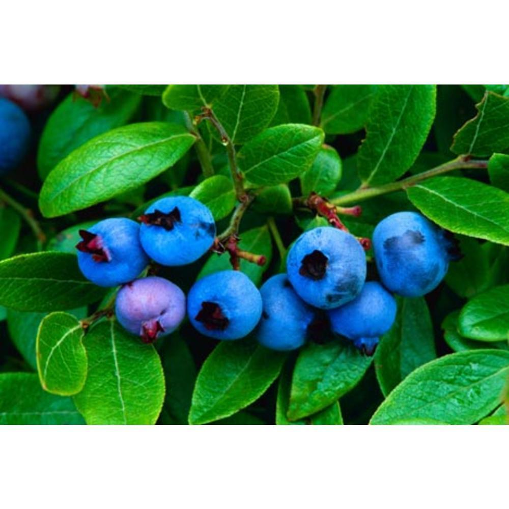 Blueberries 100 γρ.