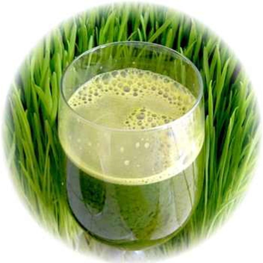 Wheat Grass / Σιταρόχορτο bio 125γρ.