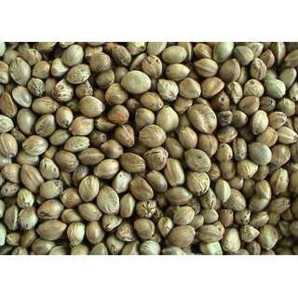 Hemp Seeds bio 250 γρ.
